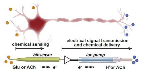 how to get an electric signal from chemicals