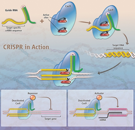 crispr in actionsite