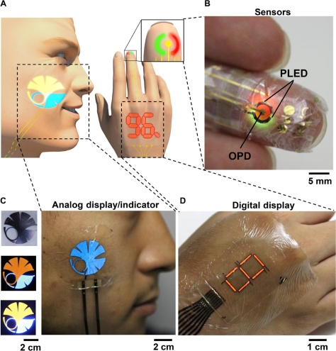 Smart e-skin system comprising health-monitoring sensors, displays, and ultraflexible PLEDs. (A) Schematic illustration of the optoelectronic skins (oe-skins) system. (B) Photograph of a finger with the ultraflexible organic optical sensor attached. (C) Photographs of a human face with a blue logo of the University of Tokyo and a two-color logo. The brightness can be changed by the operation voltage. (D) Photograph of a red seven-segment PLEDs displayed on a hand. Science Advances 15 Apr 2016: Vol. 2, no. 4, e1501856 DOI: 10.1126/sciadv.1501856