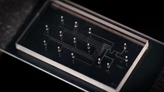 Close-up of the single cell isolation biochip Credit: National University of Singapore